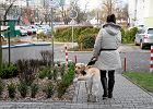 Przewoźnik ma przeprosić i zapłaci 5 tys. zł za niewpuszczenie niewidomej z psem do busa