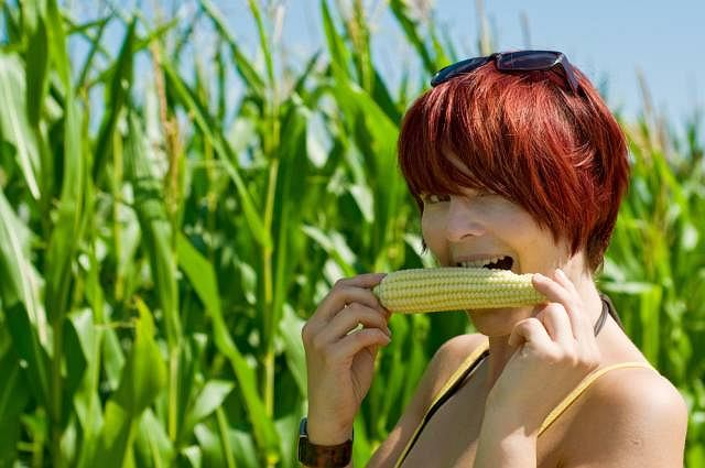 Dzięki powstaniu nowych,odporniejszych, a zarazem wyjątkowo smacznych odmian kukurydzy możemy cieszyć się ich smakiem prosto z pola. Kiedyś kukurydza cukrowa, kochana nie tylko przez dzieci, pochodziła głównie z importu
