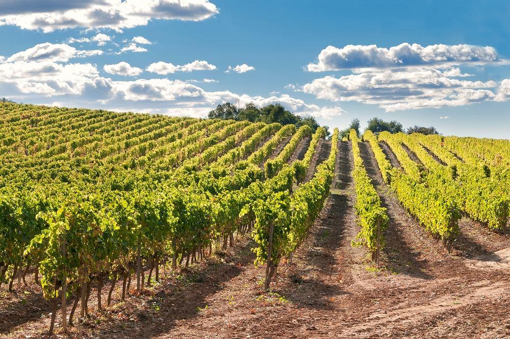 Winnica w Hiszpanii