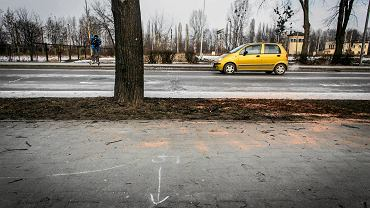 Drzewo, w które uderzyła rządowa limuzyna Beaty Szydło