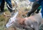 �mier� jelenia w m�czarniach - oprawcy w ko�cu ponios� konsekwencje? Sprawa w prokuraturze