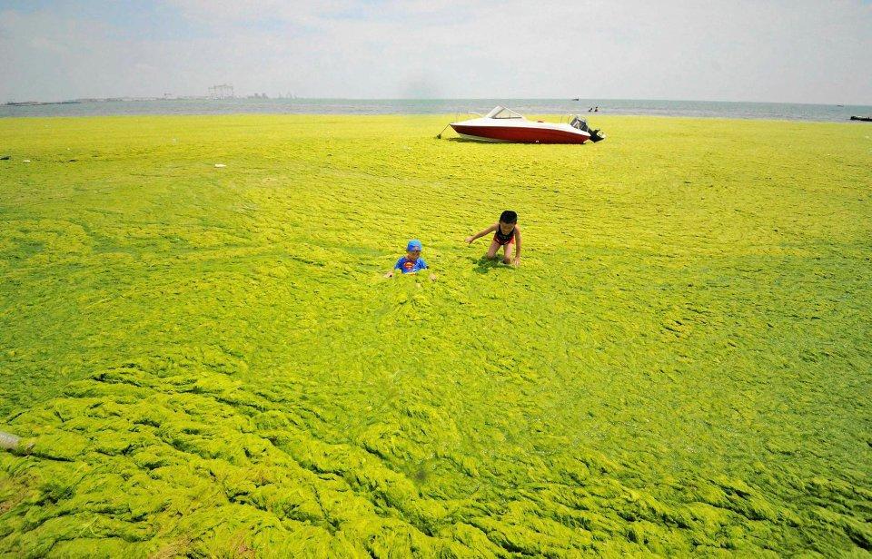 To nie bagno. To pokryta glonami pla�a w Haiyang w Chinach. A na niej bawi� si� dzieci