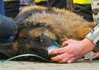 Warszawa. Strażacy uratowali z pożaru psa. Musieli mu podać tlen [ZDJĘCIA i WIDEO]