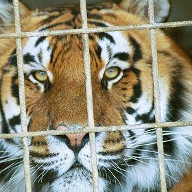 Zwierzęta -