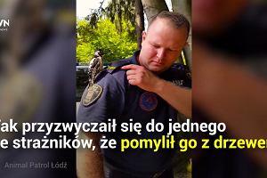 Dzięcioł Wacław, polski ptak, który został internetową gwiazdą