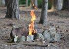 Leśniczy: Niektórym brakuje wyobraźni. Ludzie w środku lasu rozpalają ognisko i robią grilla