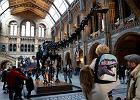 Najsłynniejszy szkielet świata, Dippy, odchodzi na emeryturę