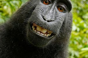 Małpy mogłyby z nami pogadać