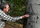 Tajemnicze napisy z 1945 r. na drzewach. Odnalazł je pasjonat historii
