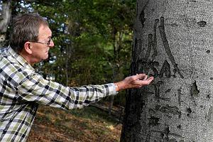 Tajemnicze napisy z 1945 r. na drzewach. Odnalaz� je pasjonat historii