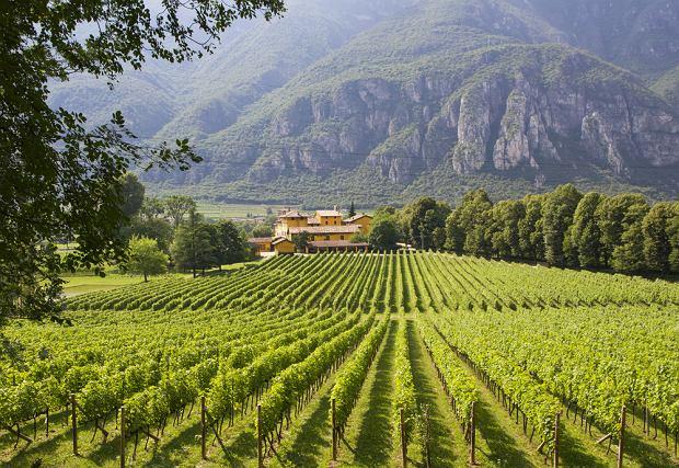 Winnica w Trento