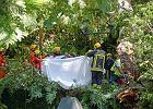 Drzewo zabiło 12 osób na Maderze