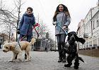 WOŚP 2017. Na płockim Starym Rynku odbył się orkiestrowy psi spacer [FOTO]