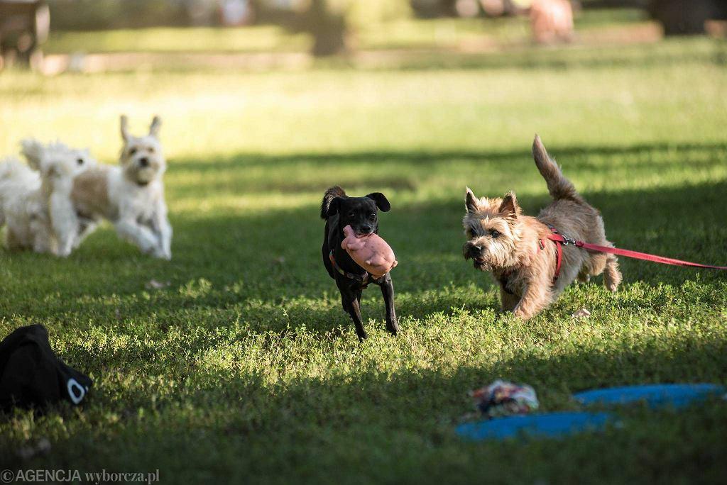 Park Tołpy zebrał najwięcej głosów w plebiscycie Pies w Wielkim Mieście / KORNELIA GŁOWACKA-WOLF