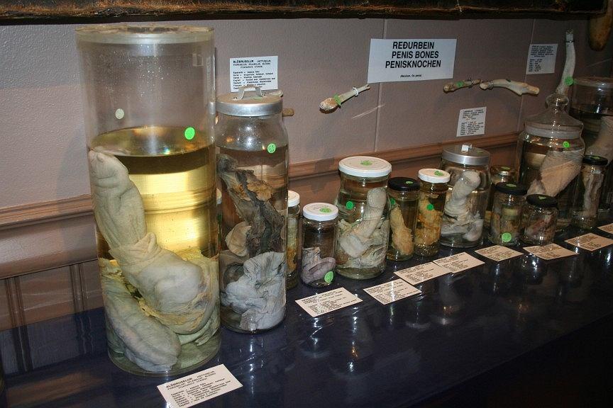 Islandzkie Muzeum Fallologiczne