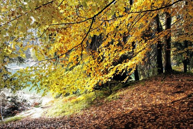 Koniec z�otej jesieni: gwa�towne och�odzenie, deszcz, nawet ze �niegiem