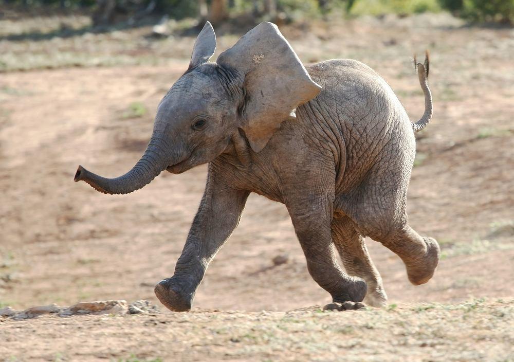 Top 15 Najsłodsze Zwierzęta świata