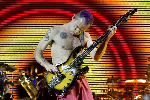 Flea to bez wątpienia muzyczne zwierzę. Muzyk Red Hot Chili Peppers jest również świetnym nauczycielem gry na basie. Jego uczniem został... goryl o imieniu Koko, który okazał się muzycznym odkryciem.