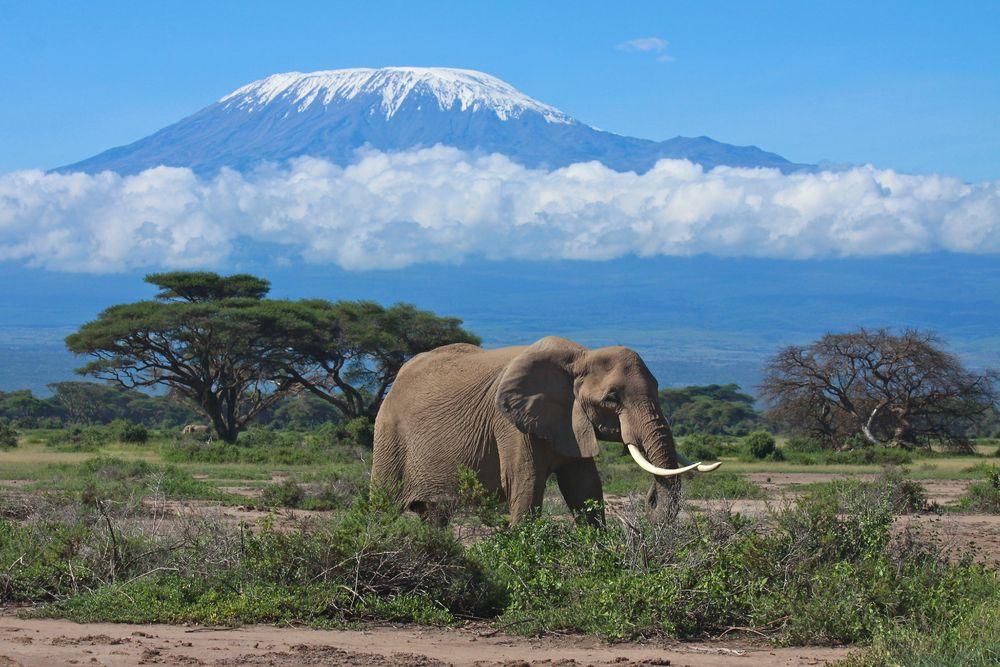 Wycieczka do Afryki. Tanzania - Kilimandżaro. / fot. Shutterstock