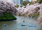 8 dowodów na to, że wiosna jest najpiękniejszą porą roku. Miejsca na świecie, które toną w kwiatach
