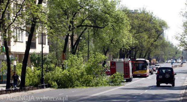 Drzewo run�o na ul. Belwedersk�
