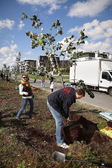 Zdjęcie numer 8 w galerii - Mieszkańcy Wilanowa sami posadzili sobie drzewa