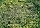 Pielęgnacja trawnika wiosną - odchwaszczanie i walka z mchem