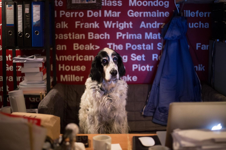 Najważniejszy w Pardon, To Tu jest pies właściciela - Ykos (fot. Luka Łukasiak)