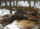 Poszkodowanymi dzikimi zwierzętami w Polsce nie ma kto się zająć