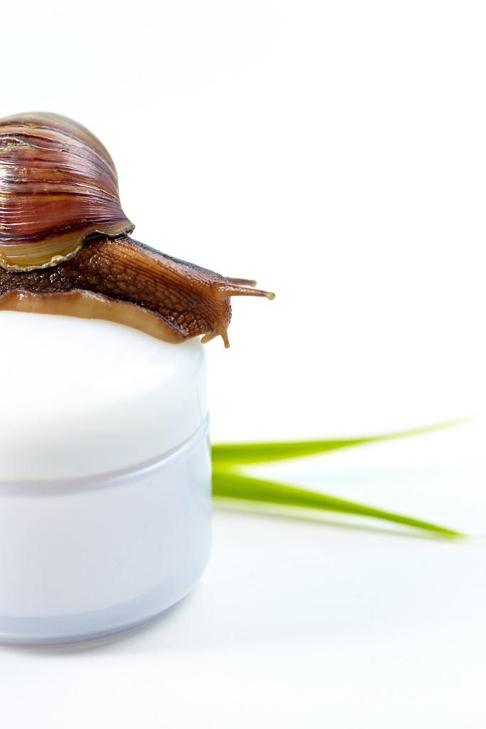 Krem ze śluzem ślimaka