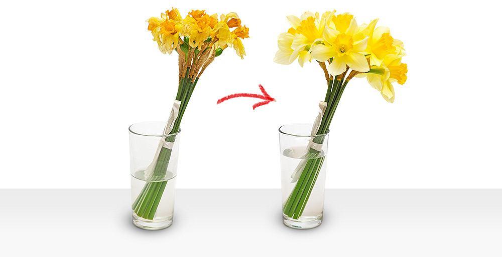 Co zrobić, aby opóźnić więdnięcie kwiatów i jak odpowiednio dobrać do nich wazon?