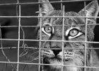 Adam Wajrak: Jedynym gatunkiem, który szkodzi naturze, jest człowiek