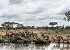 Serengeti zniknie w ciągu kilku dekad?