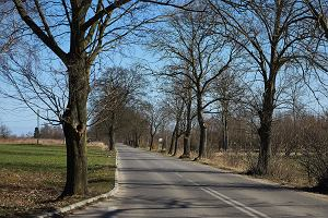 Wycinają pół tysiąca drzew przy trasie. Nowych nie będzie