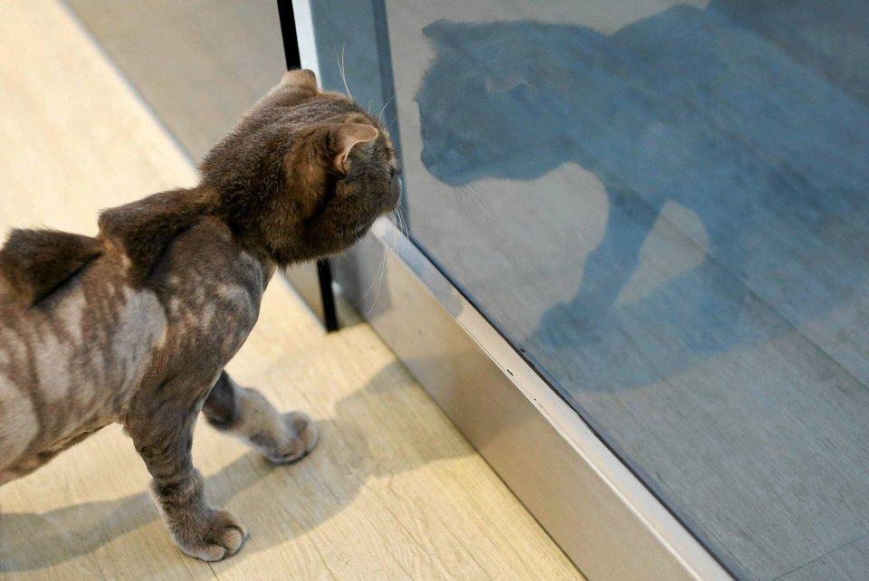 Pies Jak Lew Kot Jak Dinozaur Oryginalne Pomysły Tajwańskiego