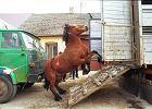 Rusza jarmark koński w Skaryszewie. Oni alarmują: obok będzie się odbywał handel śmiercią