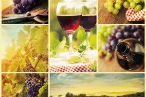 Resweratrol - długowieczność z winogron?