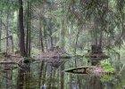 W obronie Puszczy. Jeżeli jest las, to musi rosnąć