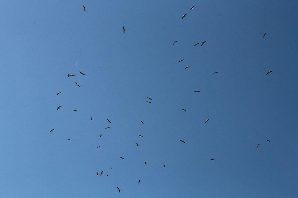 W tym roku bociany odlatują do Afryki dużo wcześniej