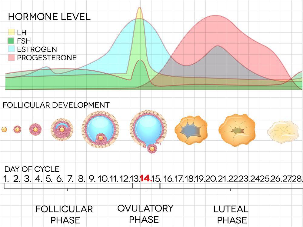 Luteina to inaczej progesteron