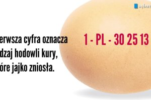 Co oznaczają kody wybite na jajkach?
