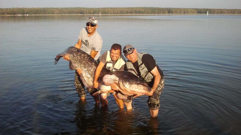 Tomasz Rał z Częstochowy (na zdjęciu w środku) złowił na zbiorniku rybnickim suma giganta