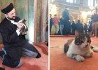 Imam otworzy� meczet dla bezdomnych kot�w. �pi� pomi�dzy modl�cymi si� muzu�manami [WIDEO]