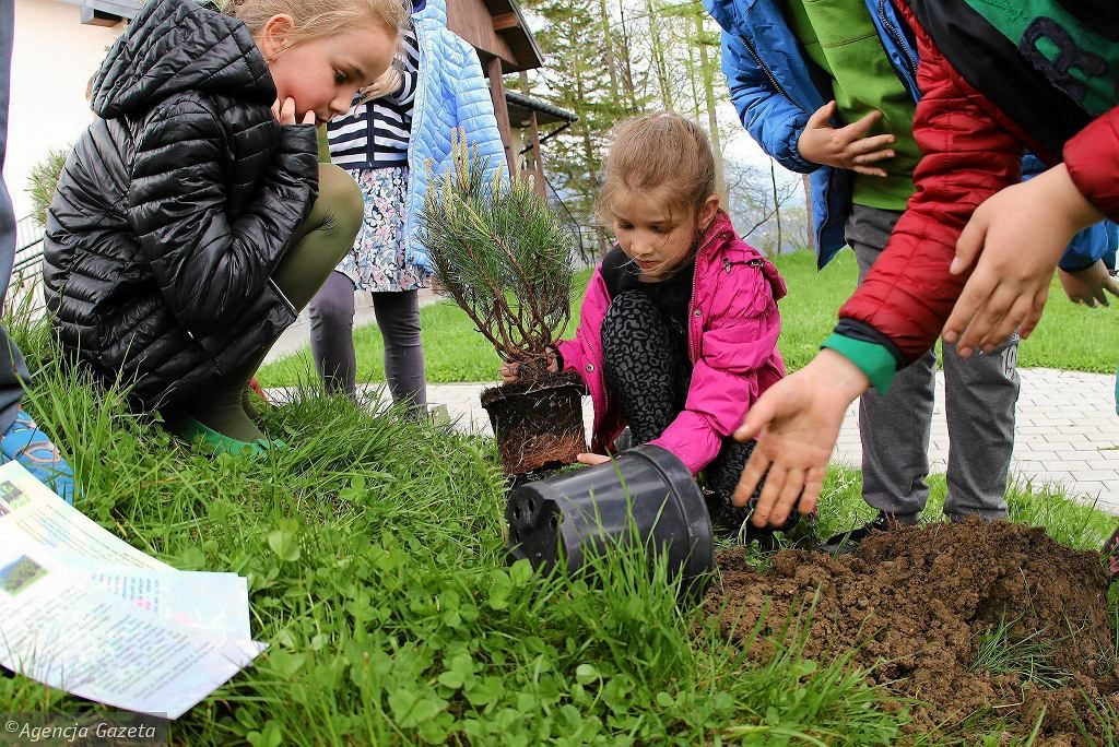 Zakopane, Cyrhla. Dzieci ze szkoły podstawowej sadziły drzewa i krzewy. / MAREK PODMOKŁY