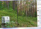 Lasy Państwowe radzą, co robić, kiedy zgubisz się w lesie. Zamiast na mech, patrz na słupki