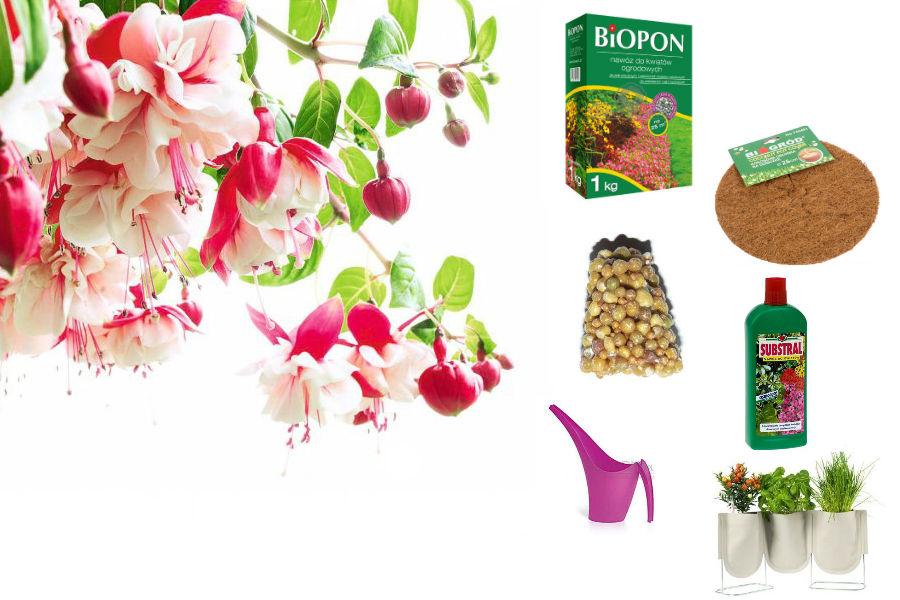 Jak nawozić kwiaty balkonowe?