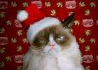 Grumpy Cat ma najgorsze �wi�ta. Jak z mem�w zrobi� miliony dolar�w