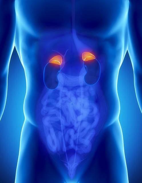 Jednym z wytwarzanych przez nadnercza hormon�w jest kortyzol, czyli hormon stresu