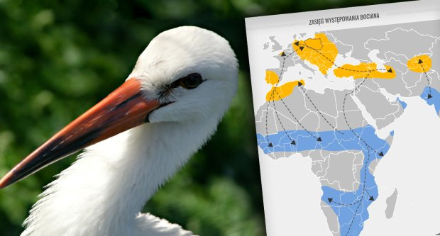 Dlaczego wiosną ptaki wracają do Polski, zamiast zostać na południu?