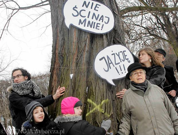 """Mieszka�cy broni� drzew: """"Ja �yj�. Nie �cinaj mnie"""""""
